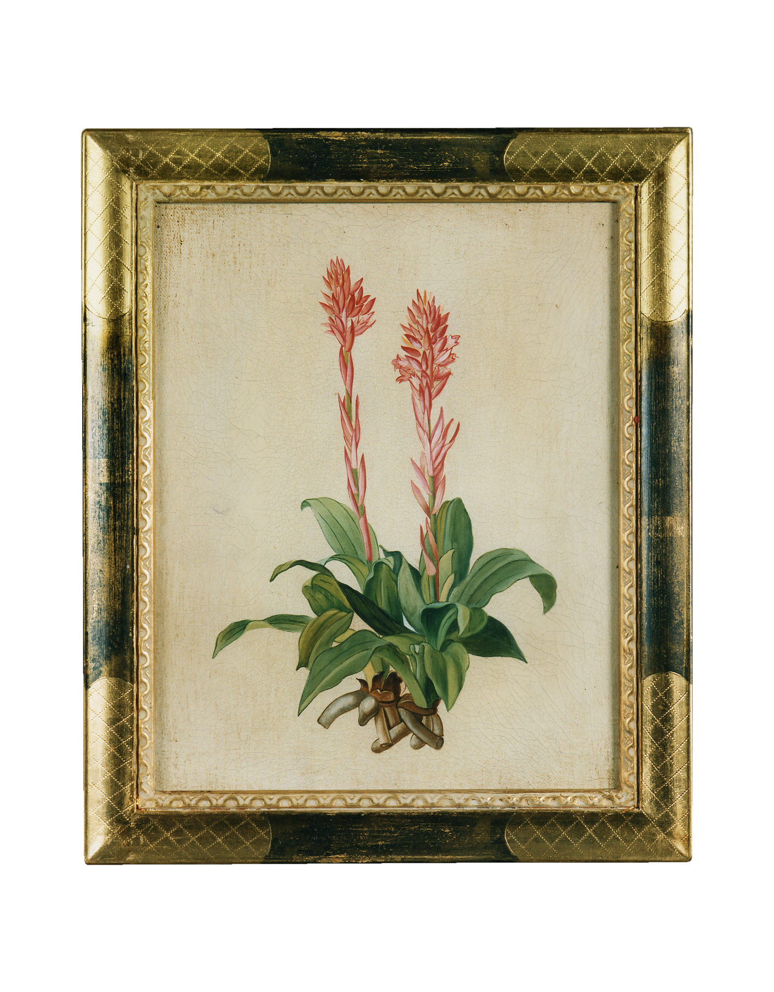 Image of Oil on Canvas Botanical Painting