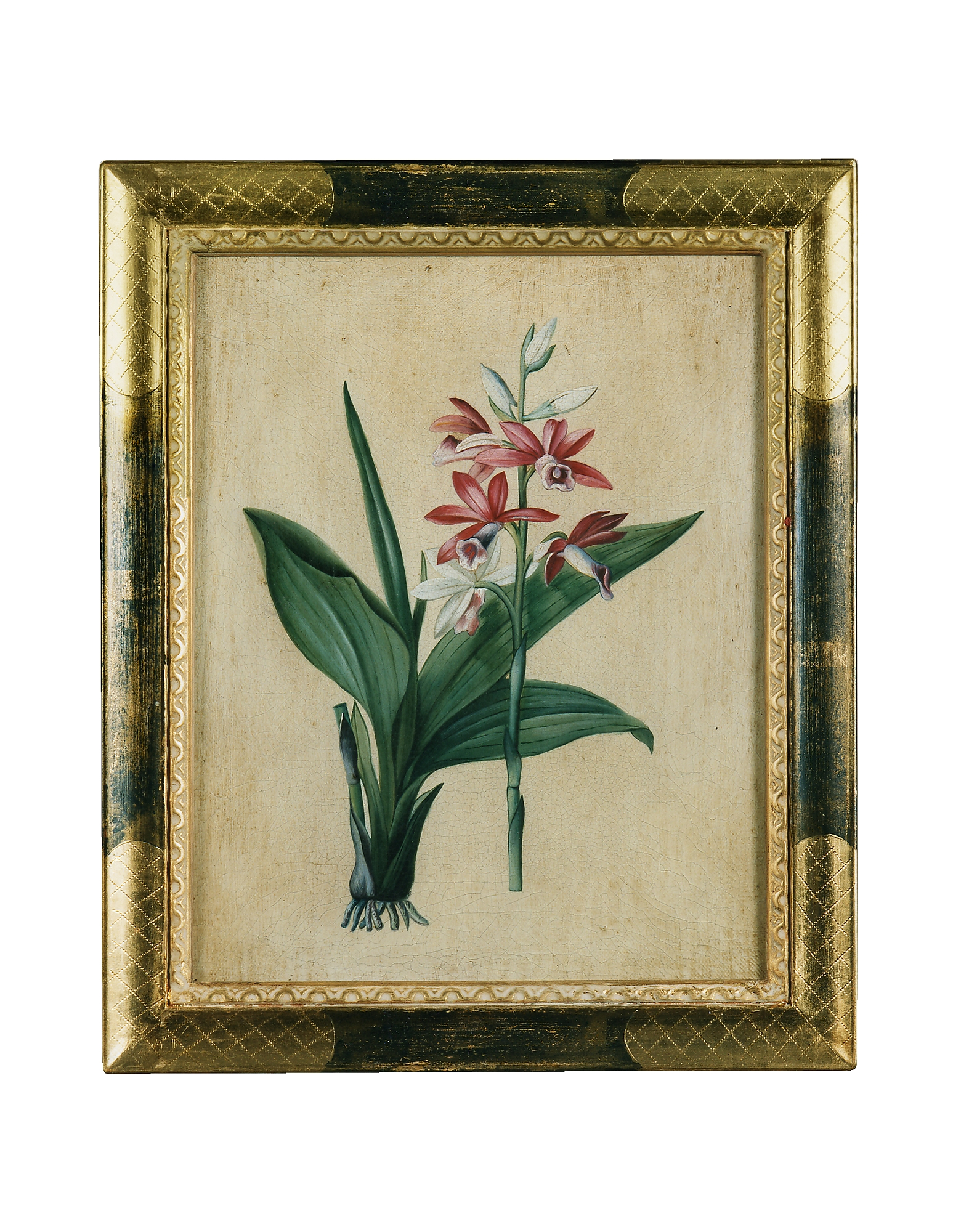 Bianchi Arte Paintings, Oil on Canvas Botanical Painting