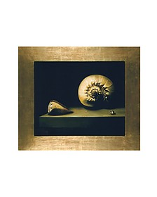 Oil on Canvas Shells Painting - Bianchi Arte